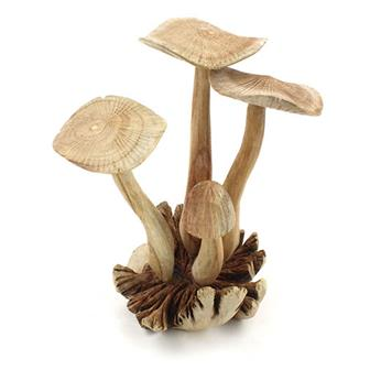 Large Parasite Wood Mushrooms